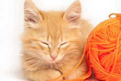 Cute red kitten Stock Images