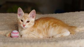 Cute red kitten with ball royalty free stock photos