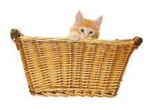 Cute red kitten in basket Stock Image