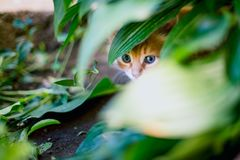 Cute red kitten in the grass.  royalty free stock photography
