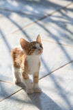 Cute red kitten looking curiously upwards Stock Photo