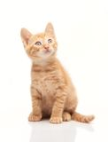 Cute red kitten looking upside. Isolated on white background Royalty Free Stock Photo