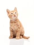 Cute red kitten looking upside Royalty Free Stock Photo