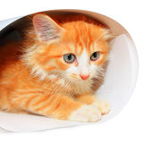 Cute red kitty boy Royalty Free Stock Images