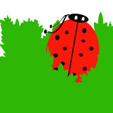 Cute Red Ladybug royalty free stock image