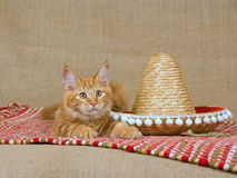 Cute red Maine Coon MC kitten with sombrero. Pretty and cute red and white Maine Coon kitten lying on red woven rug with sombrero hat, on hessian background royalty free stock photography