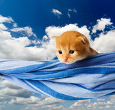 Cute red orange kitten in hammock at blue sky Royalty Free Stock Photography