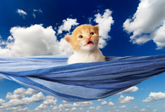 Cute red orange kitten in hammock at blue sky Stock Image