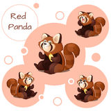 Cute red Panda with nuts Stock Images