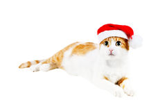Cute red and white cat in santa's hat Royalty Free Stock Photo