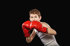 Cute redhead boxer Stock Photography