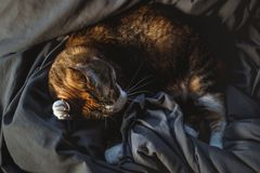 Cute redhead cat paw scratching behind the ear. Cosy evening illumination stock photography