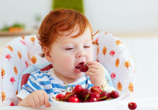 Cute redhead infant baby tasting sweet cherries while sitting in highchair on the kitchen Stock Image