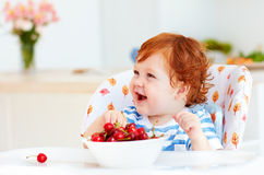Cute redhead infant baby tasting sweet cherries while sitting in highchair on the kitchen Stock Photos
