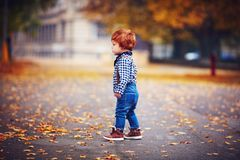 Cute redhead toddler baby boy walking among fallen leaves in autumn park stock photos