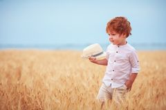 Cute redhead, two years old baby boy walking through the field of ripe wheat royalty free stock photography