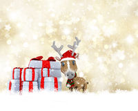 Cute Reindeer on a golden Christmas background Royalty Free Stock Image