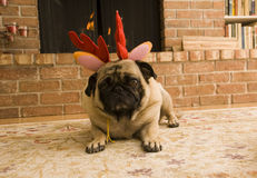 Cute Reindeer Pug Stock Photography