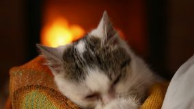 Cute rescue kitten at the fireplace cleaning itself in the lap of new owner stock video