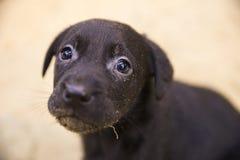 Cute Rescue Puppy Dog Eyes stock photos