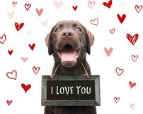 Cute romantic dog says i love you, text on sign board with red h. Earts valentine background animal love royalty free illustration