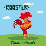 Cute Rooster farm animal character, farm animals, vector illustration on field background. Cartoon style, isolated stock illustration