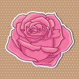 Cute rose. Royalty Free Stock Photo