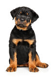 Cute Rottweiler puppy on white Stock Photo