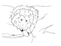 Cute rough collie lying at a bed. Ink Stock Image