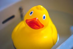 Rubber Duck child`s toy floating in the bathroom sink. royalty free stock photos