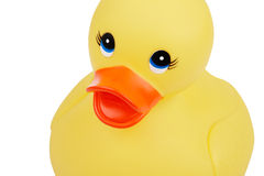 Cute Rubber Duckling Stock Photos