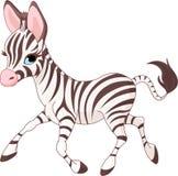 Cute  running   baby Zebra Stock Images