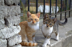 Cute sad black white cat. Two brindle kitten on street fence staring Royalty Free Stock Photos
