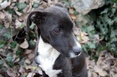 Cute sad black and white dog Stock Photo
