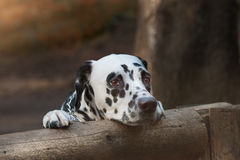 Cute sad dog in the forest Stock Images