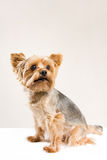 Cute sad faced dog Royalty Free Stock Photo