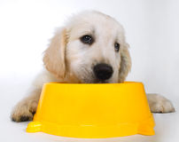 Cute sad puppy waiting for food. At yellow bowl Stock Images