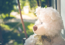 Cute sad Teddy bear Stock Photography