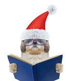 Cute santa dog with glasses reading a book. Isolated on white Royalty Free Stock Photography
