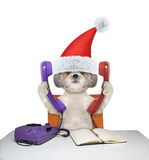 Cute santa dog is talking over the phones Stock Images