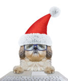 Cute santa dog using laptop or notebook stock images