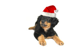 Cute santa puppy Royalty Free Stock Photo