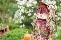 A cute Scarecrow Royalty Free Stock Photography