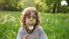 A cute schoolboy with curly hair is blowing a dandelion against the backdrop of a summer green glade. Dynamic video. Children Day stock video footage