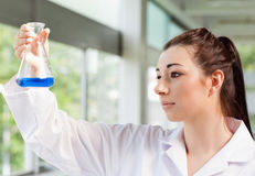 Cute science student looking at a blue liquid Royalty Free Stock Photography