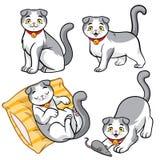 Cute scottish fold cat. Vector of cute scottish fold cat stock illustration