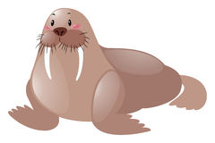 Free Cute Sea Lion On White Background Stock Photo - 79622800