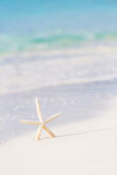 Cute sea star on seashore Stock Photos