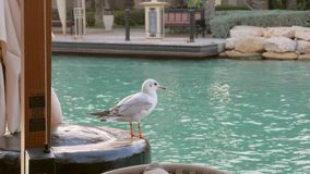 Cute seagull is sitting on embankment of sea canal in daytime in touristic place near restaurant. Close-up of bird stock video
