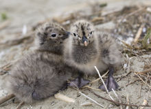 Cute Seagulls Royalty Free Stock Images